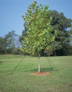 Lawson Bulk Tree Staking Kits
