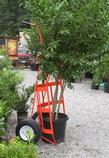 30in Orange Tree Shrub Ball Cart